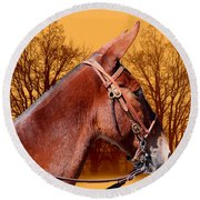 Mule Days - Westmoreland Tn  9-28-13 Round Beach Towel