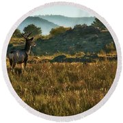 Mule Deer At De Weese Reservoir Round Beach Towel