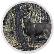 Mule Deer Buck Round Beach Towel