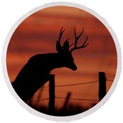 Mule Deer Buck Jumping Fence At Sunset Round Beach Towel