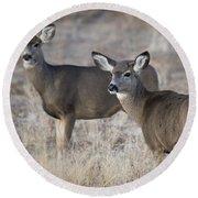 Mule Deer Does Round Beach Towel
