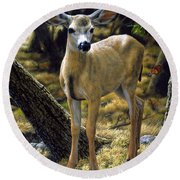 Mule Deer Fawn - Monarch Moment Round Beach Towel by Crista Forest