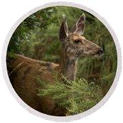 Mule Deer On Alert Round Beach Towel