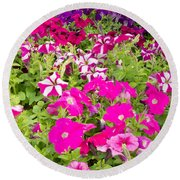 Multi-colored Blooming Petunias Background Round Beach Towel