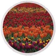 Multi-colored Tulip Fields  Round Beach Towel