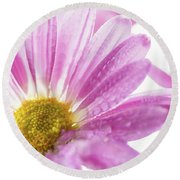 Mums Flowers Against A White Background Round Beach Towel