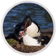 Muscovy Love Round Beach Towel