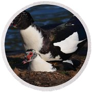 Muscovy Lovers Round Beach Towel