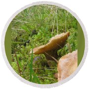 Mushroom In Grass Round Beach Towel
