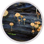 Mushrooms Amazon Jungle Brazil 4 Round Beach Towel