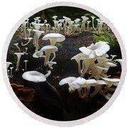 Mushrooms Amazon Jungle Brazil 5 Round Beach Towel