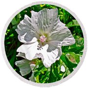 Musk Mallow Along Trail To Cap Gaspe In Forillon National Park-quebec  Round Beach Towel