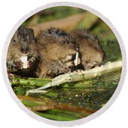 Muskrat Trio Round Beach Towel