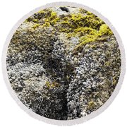 Mussels Barnacles Seaweed Closeup Round Beach Towel