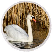 Mute Swan By Reed Beds Round Beach Towel