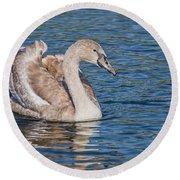 Mute Swan Cygnet Round Beach Towel