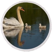 Mute Swan Pictures 244 Round Beach Towel