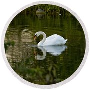 Mute Swan Pictures 85 Round Beach Towel