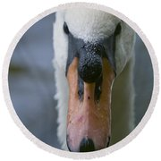 Mute Swan Pictures 88 Round Beach Towel
