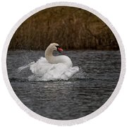 Mute Swan Pictures 97 Round Beach Towel