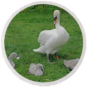 Mute Swan With Cygnets Round Beach Towel