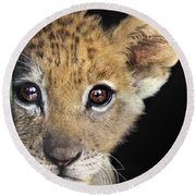 My Grandma What Big Eyes You Have African Lion Cub Wildlife Rescue Round Beach Towel