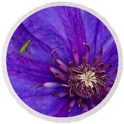 My Old Clematis Home Round Beach Towel