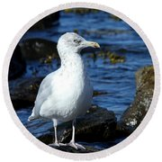 Mystic Seagull Round Beach Towel
