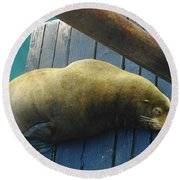 Napping Sea Lion Round Beach Towel