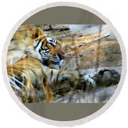 Naptime For A Bengal Tiger Round Beach Towel