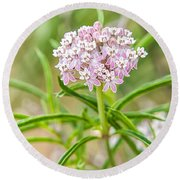 Narrowleaf Milkweed Round Beach Towel
