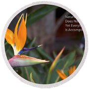 Nature Does Not Hurry Bird Of Paradise Round Beach Towel