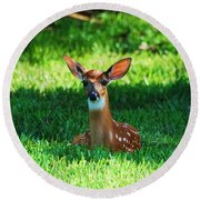 Nature In The Back Yard  Round Beach Towel