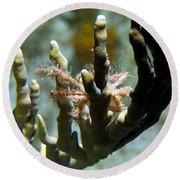 Neck Crab - Macro Undersea Reef Life Round Beach Towel