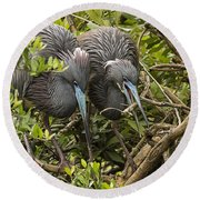 Nest Building Round Beach Towel
