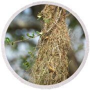 Nest Of Altamira Oriole Icterus Gularis Round Beach Towel