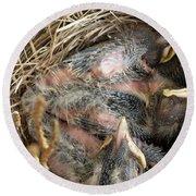 Nest Of American Robins Round Beach Towel