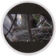 Nesting Morning Dove Round Beach Towel