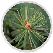 New Blue Spruce Buds Round Beach Towel