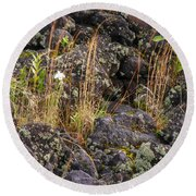 New Growth In A Desolate Area Round Beach Towel
