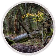 New Growth In An Old Forest Round Beach Towel