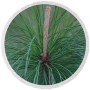 New Growth In Life Round Beach Towel