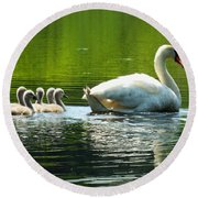 New Mute Swan Family In May Round Beach Towel