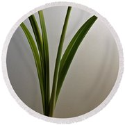 An Emerging Amaryllis Round Beach Towel
