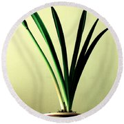 Fanned Leaves Of An Amaryllis Round Beach Towel