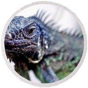 Close Up Beady Eyed Iguana Round Beach Towel