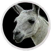 New Photographic Art Print For Sale   Portrait Of  Llama Against Black Round Beach Towel