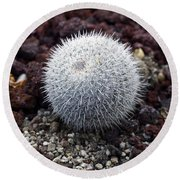 New Photographic Art Print For Sale White Ball Cactus Round Beach Towel