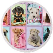 New Puppy Multipic Round Beach Towel by Greg Cuddiford