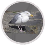 New Quay Gull 1 Round Beach Towel